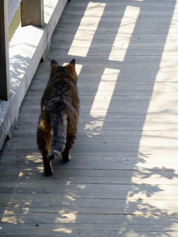 橋を渡ろうとしてるキジトラ猫3