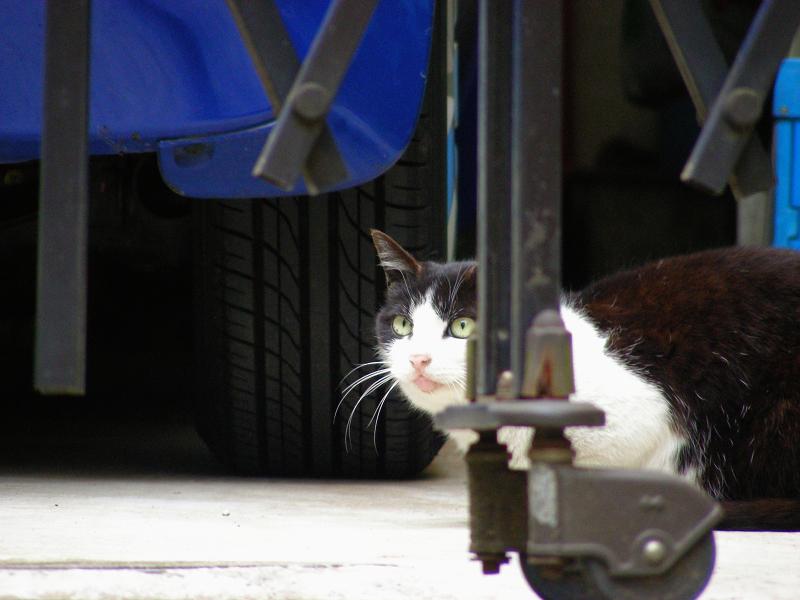 アコーディオン門扉の黒白猫2