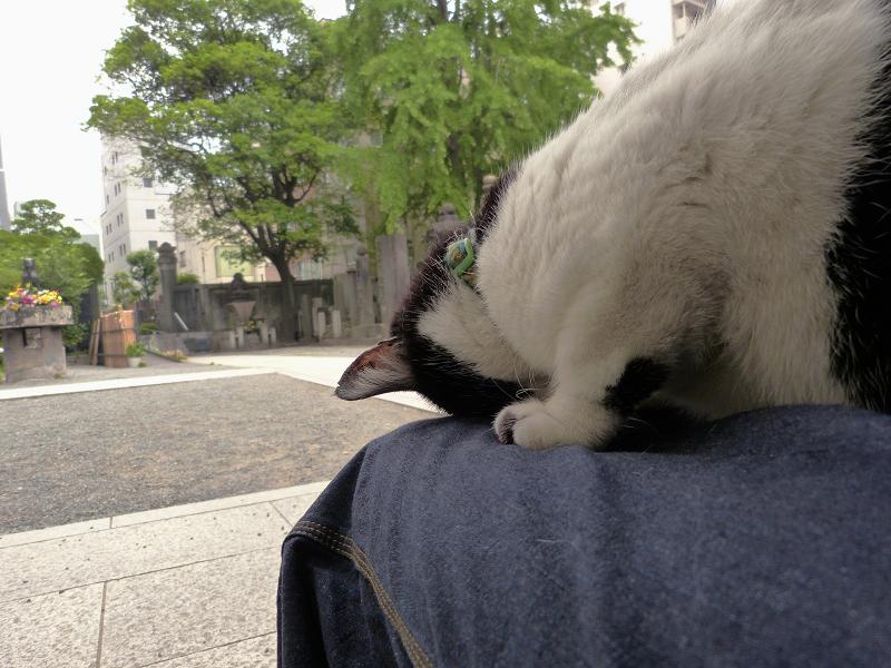 膝で『ごめん寝』し続ける白黒猫2