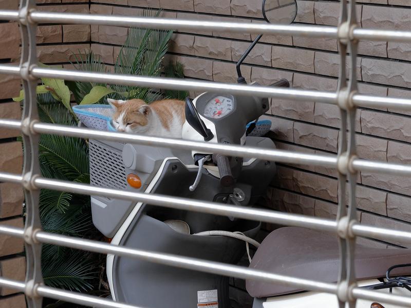 シャッターの向こうのスクーター猫