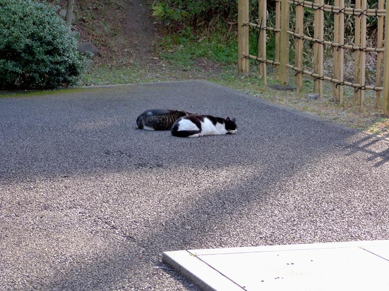 境内で寝ている猫2匹1