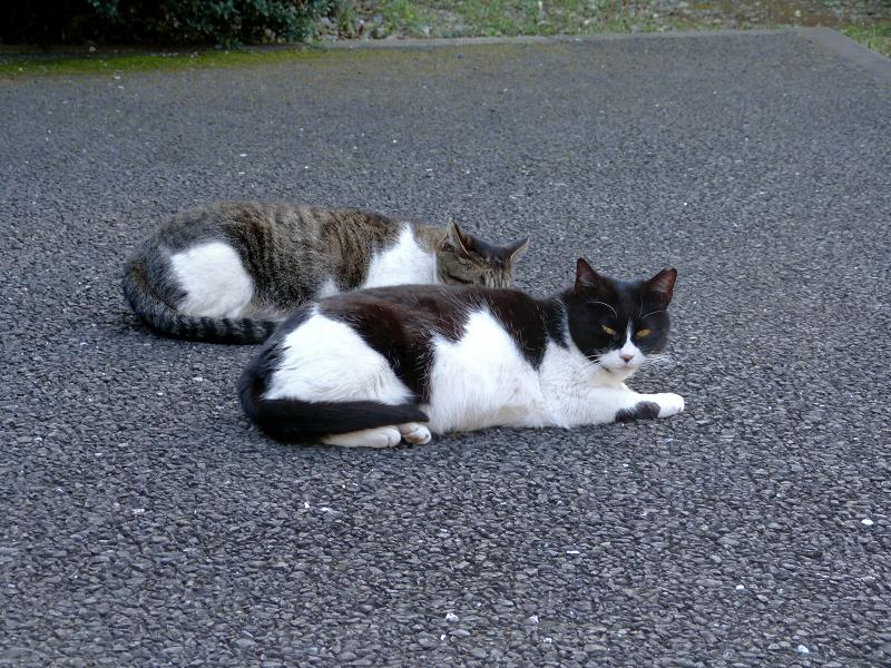 境内で寝ている猫2匹2