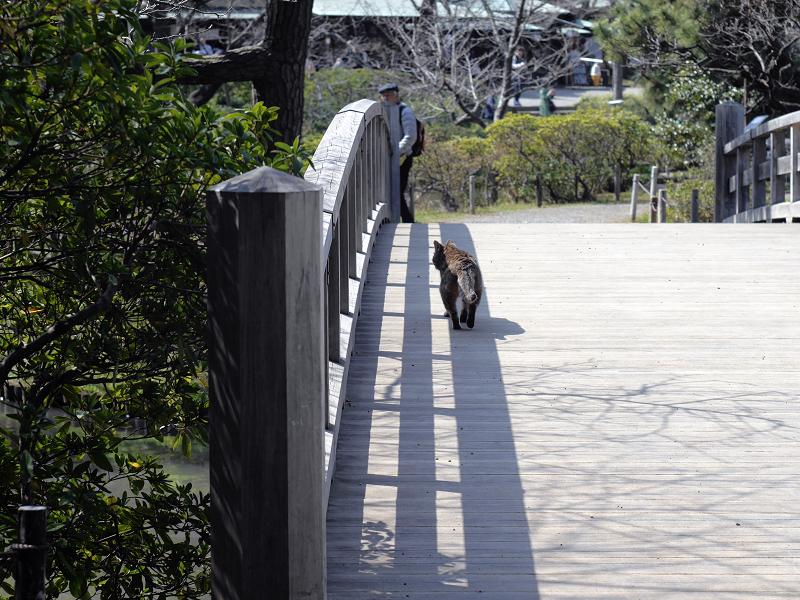 橋の端を歩くキジトラ猫2
