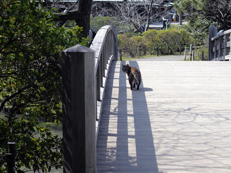 橋の端を歩くキジトラ猫3