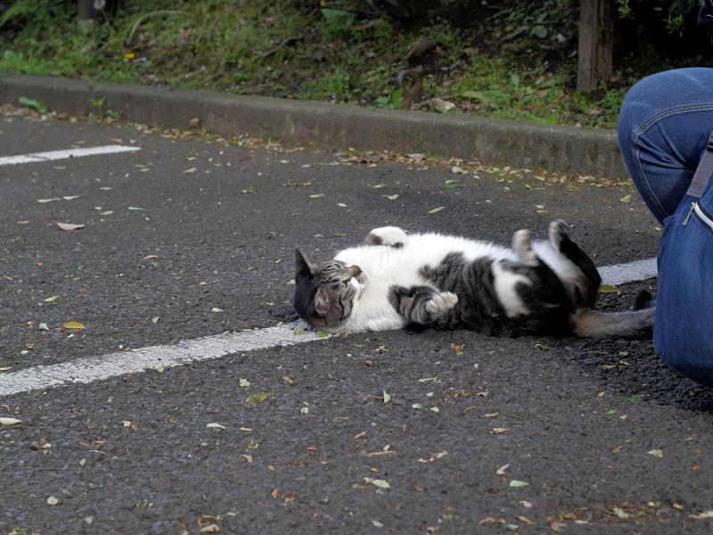 駐車場で転がってるキジ白猫2
