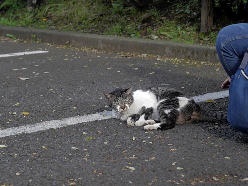 駐車場で転がってるキジ白猫3