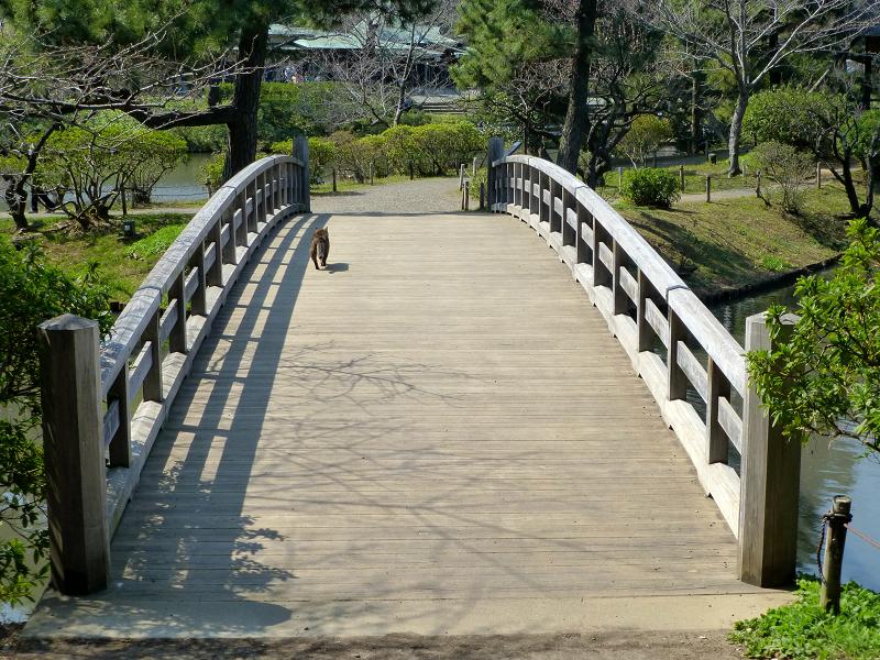 橋を横断するキジトラ猫1