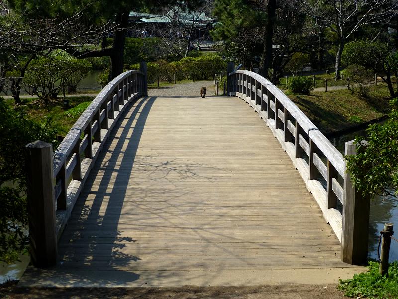 橋を横断するキジトラ猫3