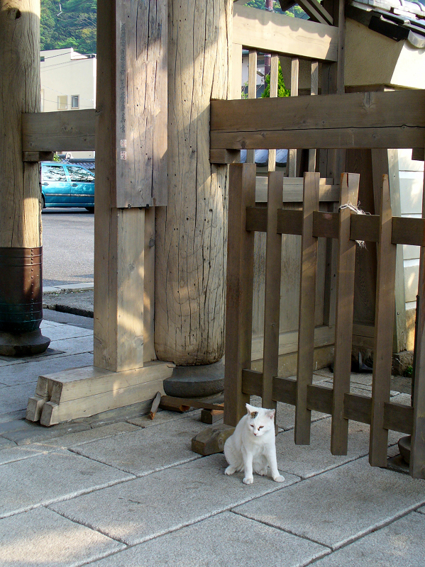 山門と白黒猫1