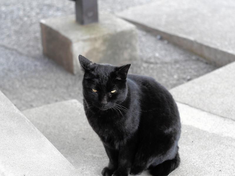 足元で座った黒猫1