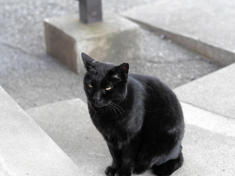 足元で座った黒猫2