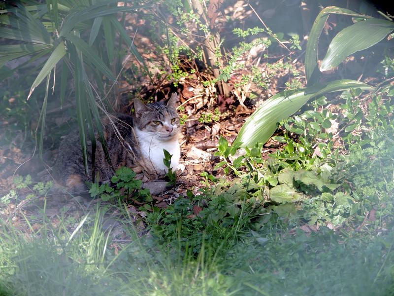 長い草と日向ぼっこの猫1