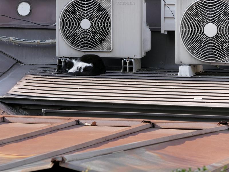 屋根上室外機と黒白猫1