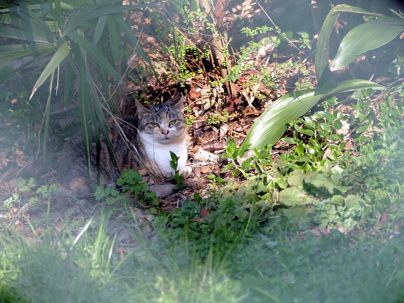 長い草と日向ぼっこの猫2