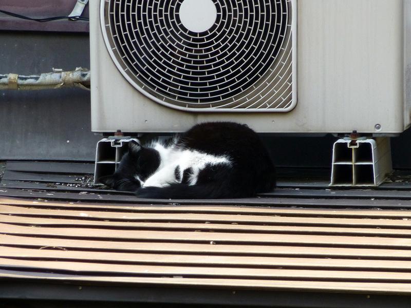 屋根上室外機と黒白猫2
