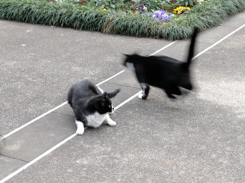 走り去る黒白猫