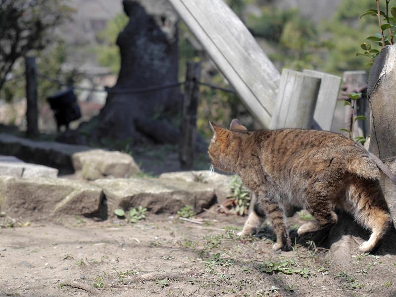 グイグイと進むキジトラ猫2