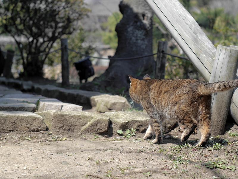 グイグイと進むキジトラ猫3