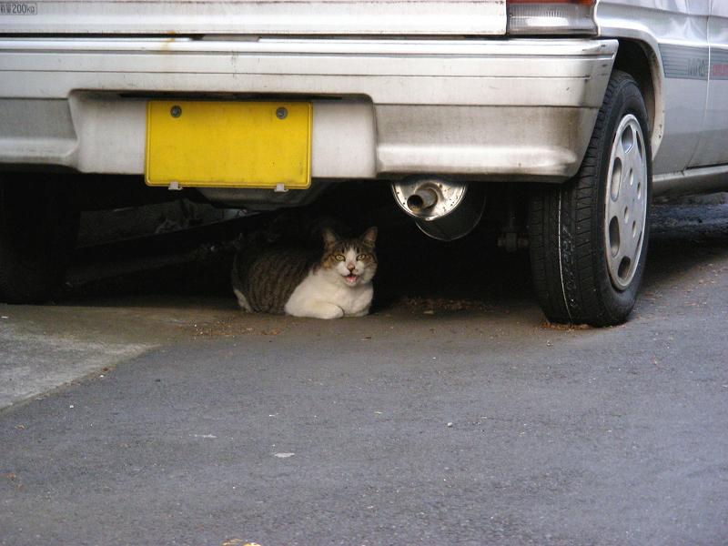 細い路地の猫1