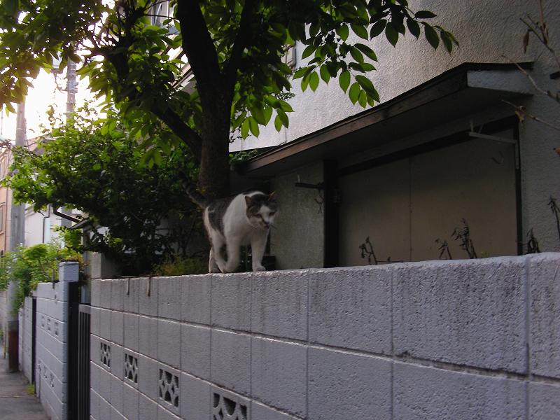 細い路地の猫2