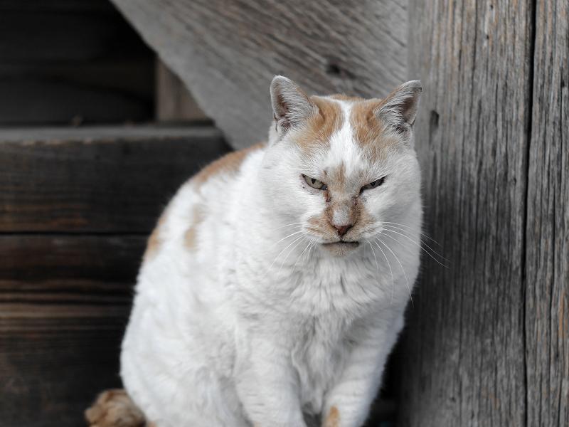 階段の横で睨む白茶猫1