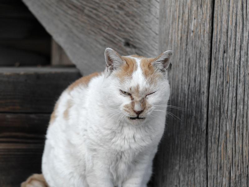 階段の横で睨む白茶猫2