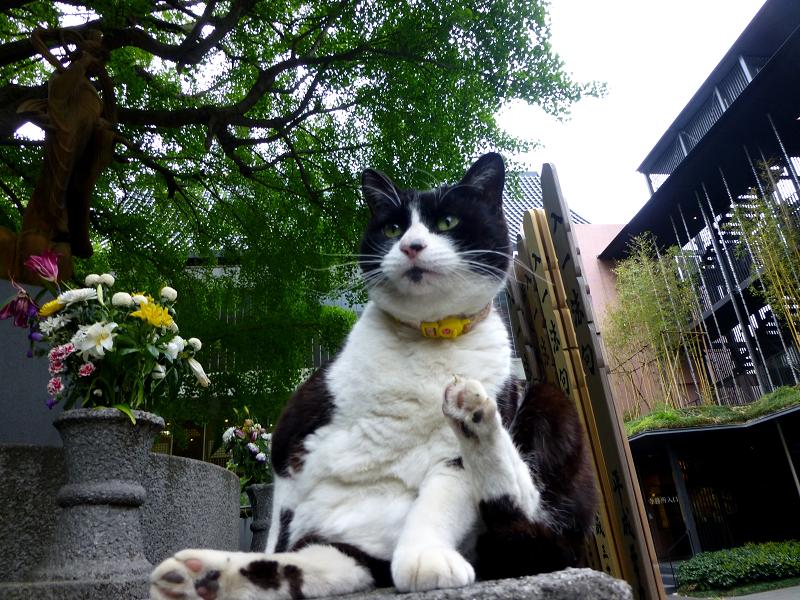 台座で毛づくろいしてた黒白猫1