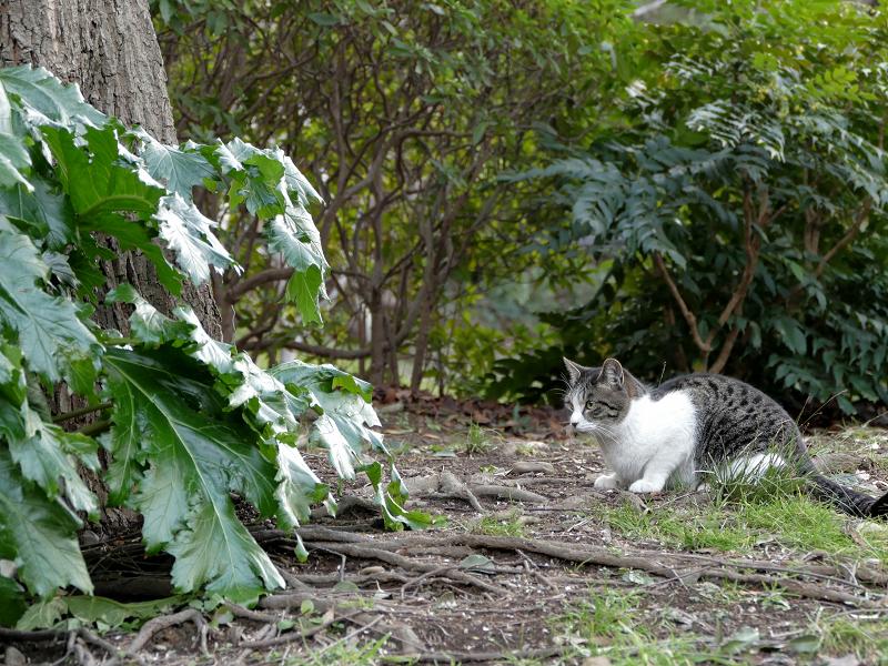 公園の記事白猫