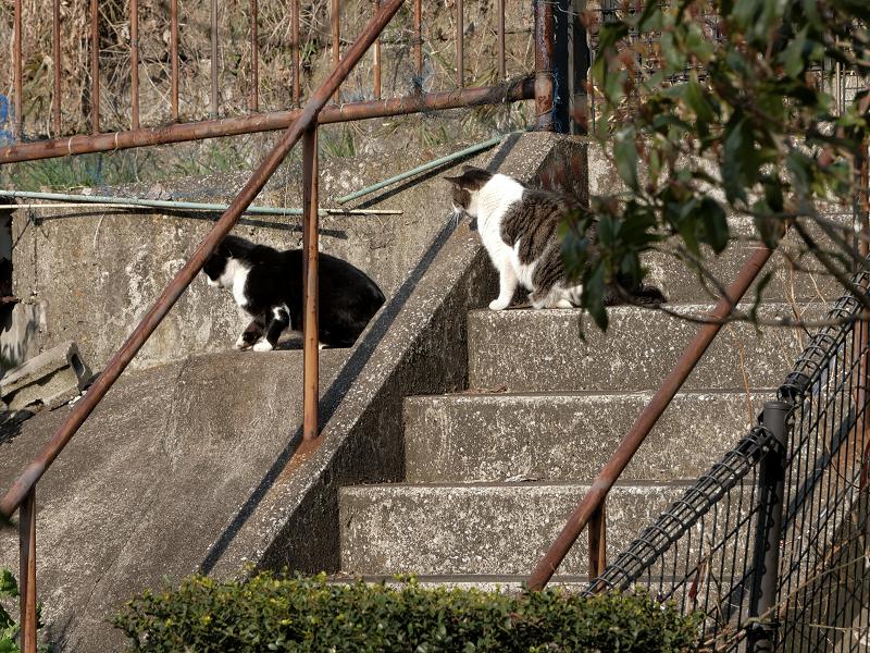 階段と斜面の猫たち1
