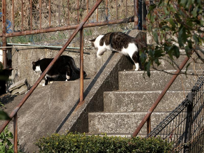 階段と斜面の猫たち2