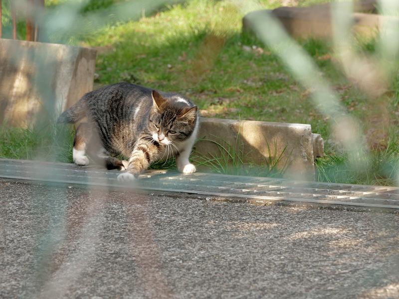 グレーチングに手を伸ばす猫3
