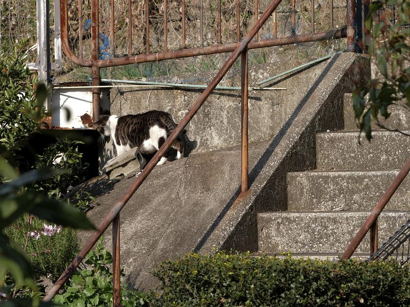階段と斜面の猫たち3