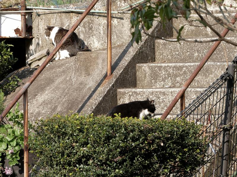 階段と斜面の猫たち4