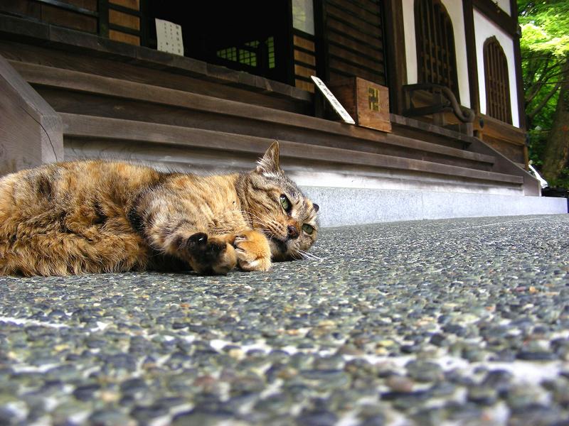 堂前で寝転がるサビ柄猫1