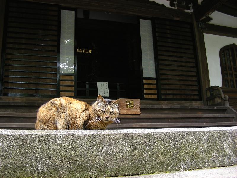 堂前で寝転がるサビ柄猫2