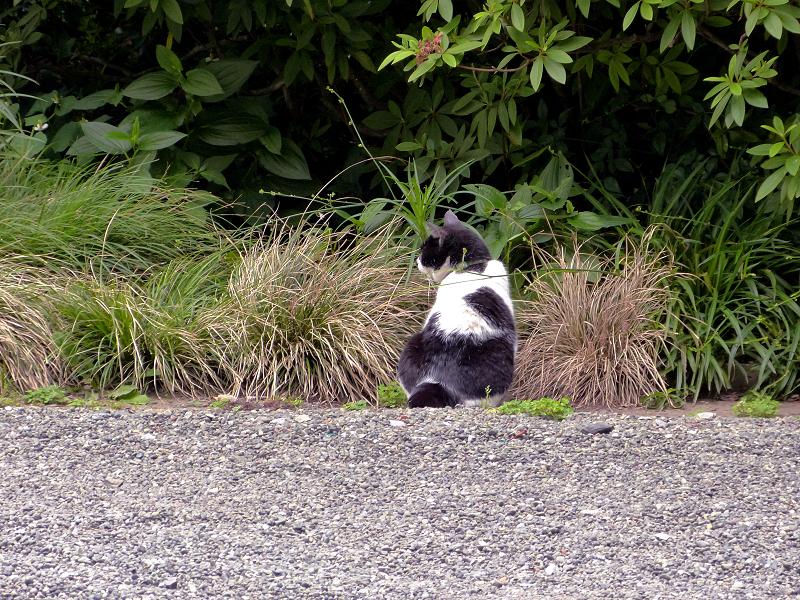 境内の端っこにいる白黒猫1