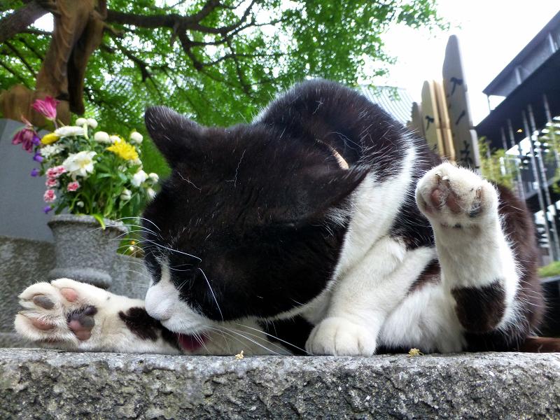 台座で毛繕い中の黒白猫