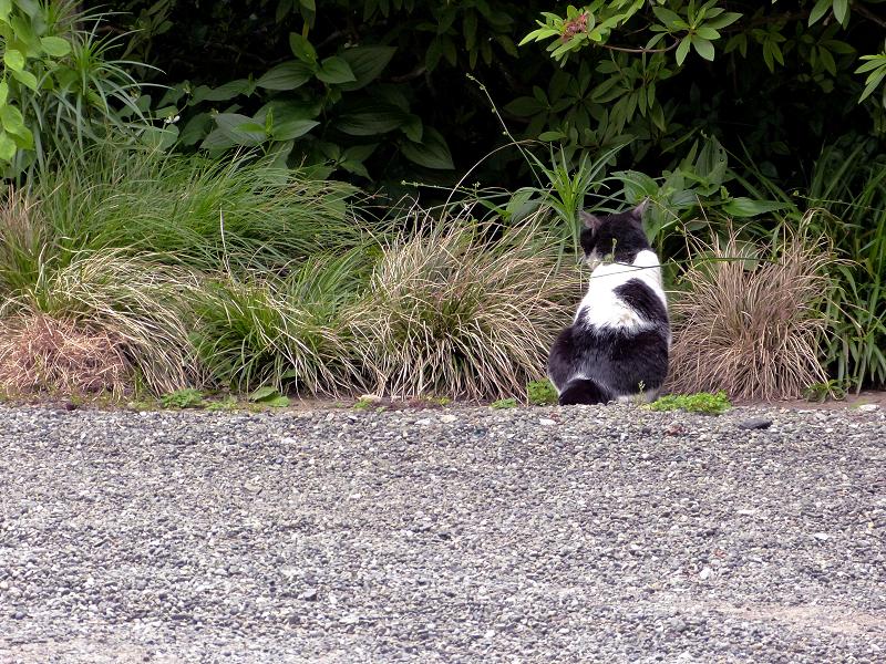 境内の端っこにいる白黒猫2