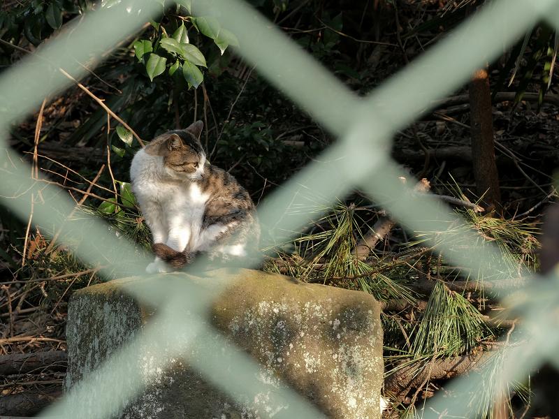 金網の向こうの猫1