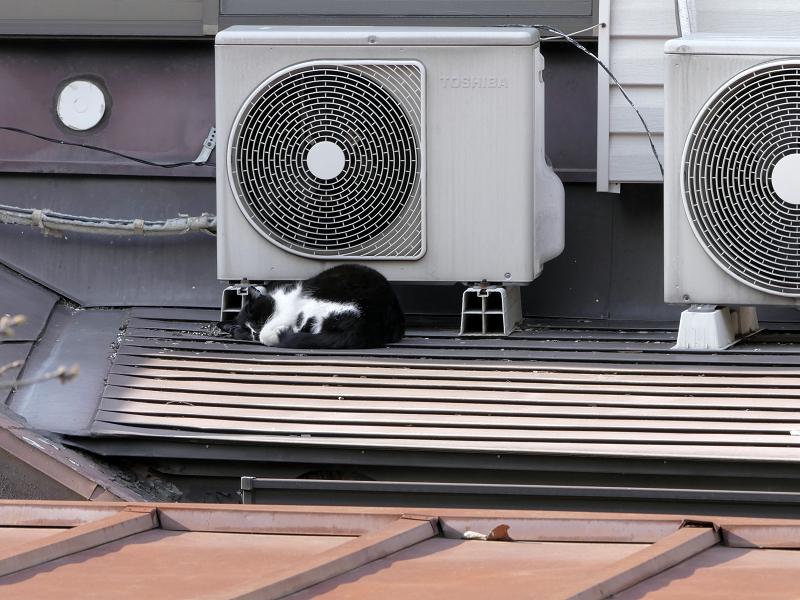 屋根上の室外機と黒白猫1