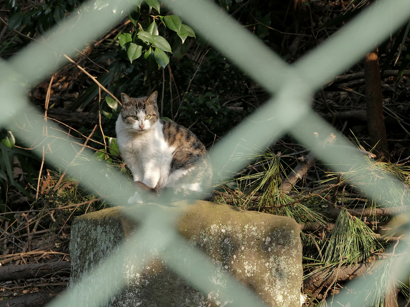 金網の向こうの猫2