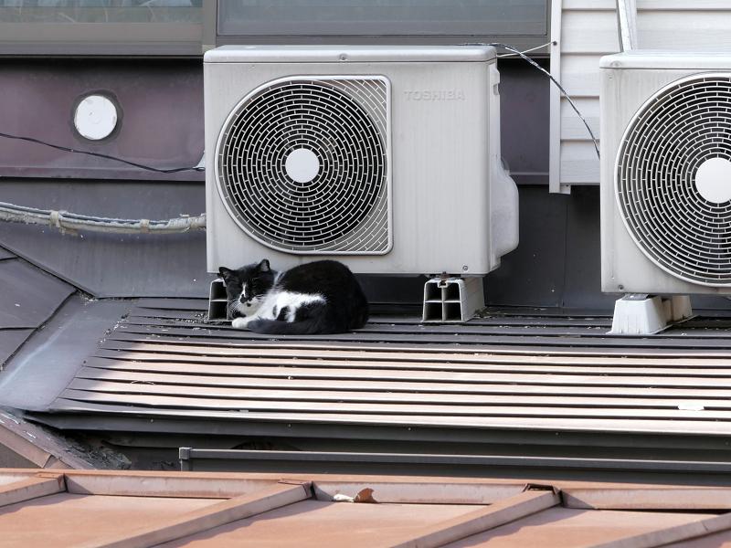 屋根上の室外機と黒白猫2