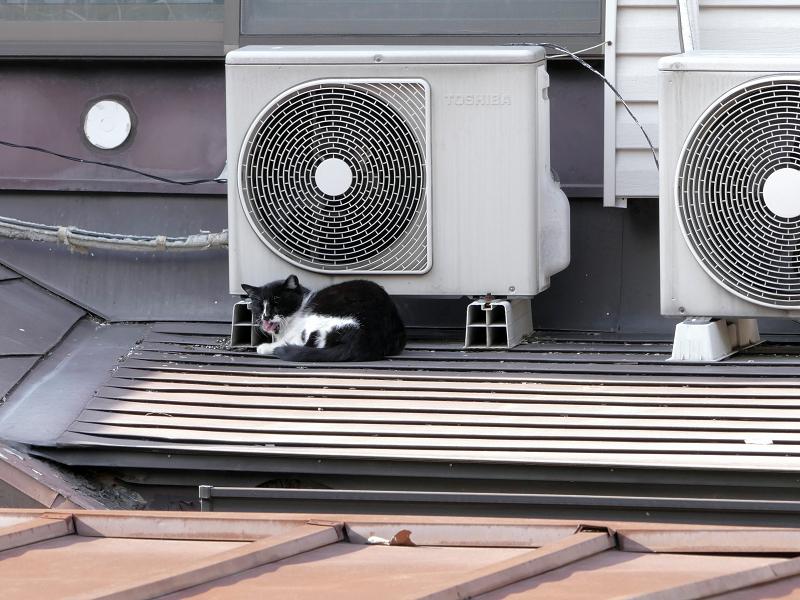 屋根上の室外機と黒白猫3