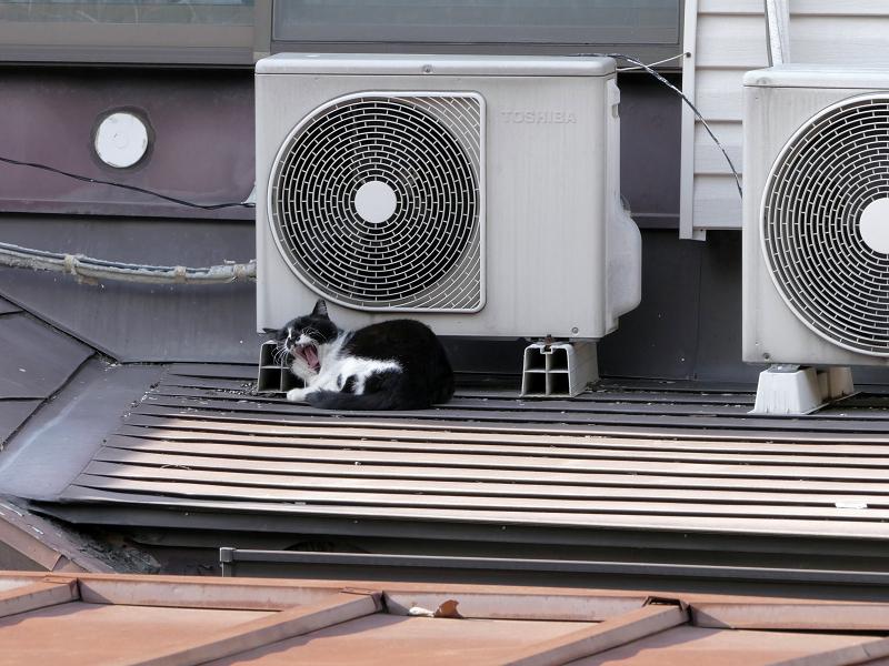 屋根上の室外機と黒白猫4