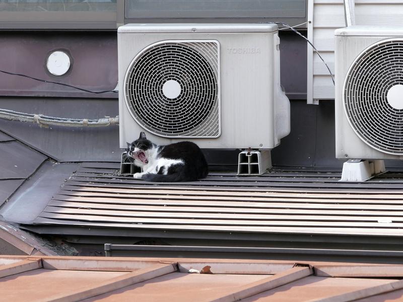 屋根上の室外機と黒白猫5