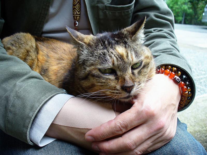 膝に乗って手にアゴ乗せてるサビ柄猫1