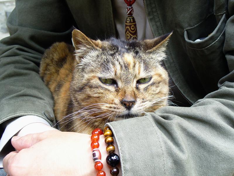 膝に乗って手にアゴ乗せてるサビ柄猫2