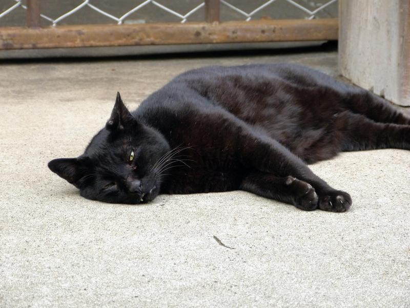 横に寝ている黒猫2