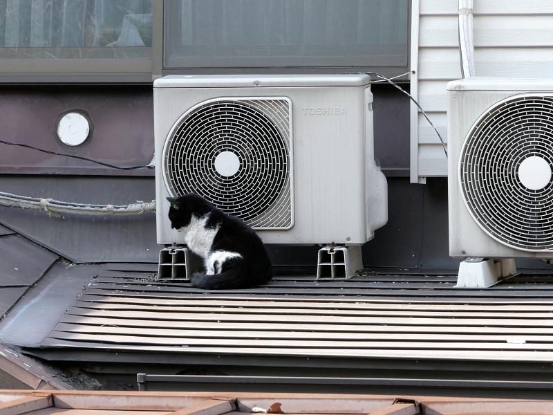 屋根の上で背中を伸ばしてる黒白猫1