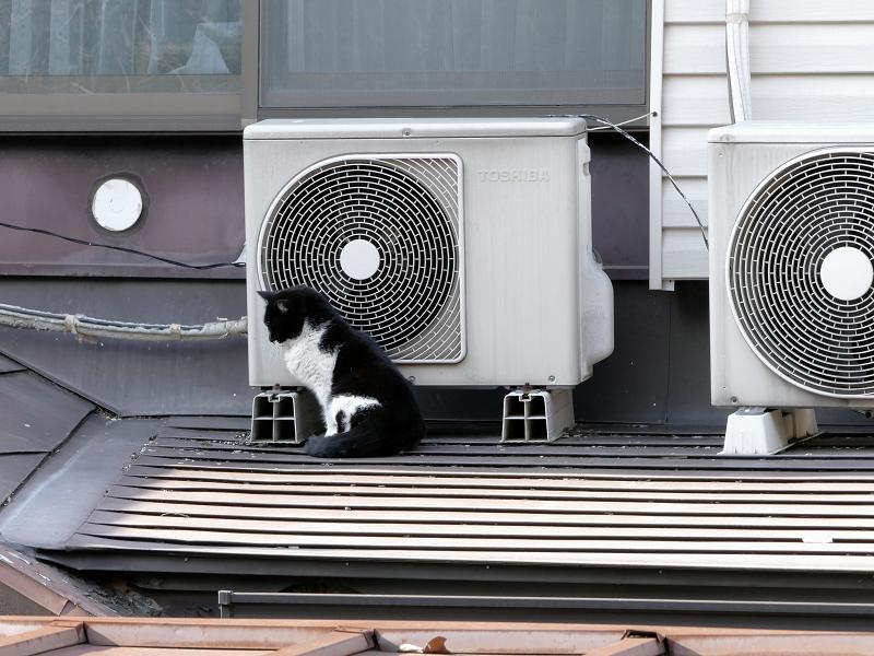 屋根の上で背中を伸ばしてる黒白猫2